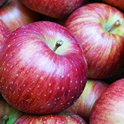 山形県産 訳あり りんご10kg(葉とらず栽培)